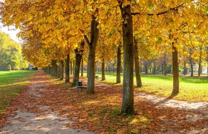 Une scène d'automne
