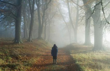 Jeune garçon dans les bois brumeux