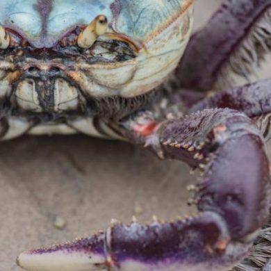 Colorful crab close-up
